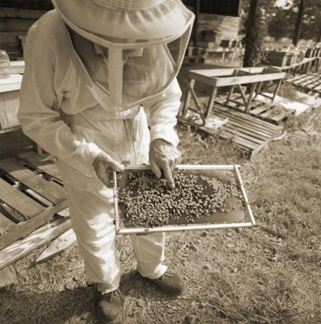 1B_Beekeeper_1